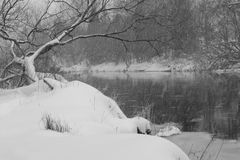 Graceful Snow Storm. Along the river bank during a severe snow storm, in black and white.  Guelph, Ontario Stock Images