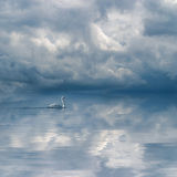 Graceful swan against cloudy sky background Stock Photos
