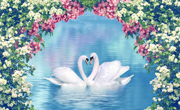 Graceful swans in love. Framed with blooming flowers Stock Photos
