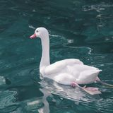 Graceful white swan swims along the blue water. Graceful white swan swims along the blue water Stock Photo