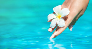 Graceful woman hands. Royalty Free Stock Photography
