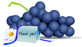 Gracias que dan las uvas Imagenes de archivo