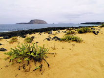 Graciosa Island Stock Photography