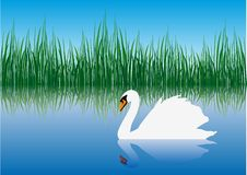 Gracious swan Royalty Free Stock Photography