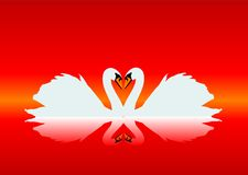 Gracious swans Stock Image