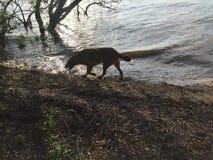 Gracja na jej dziennych jeziornych przygodach Fotografia Stock
