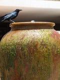 Grackle ptak na fontannie Obrazy Royalty Free