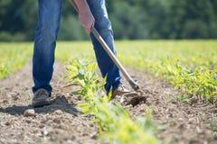 Gracować kukurydzanego pole Obrazy Royalty Free