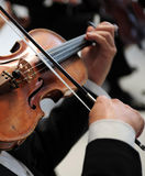 gracza skrzypce Fotografia Stock