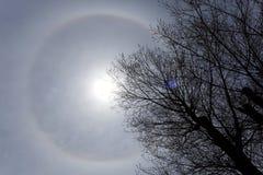 22 grad gloriacirkel runt om solen och ett träd Royaltyfri Fotografi
