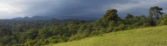 180 grad panorama av skogen i Kenya Arkivfoto