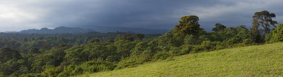 180-Grad-Panorama des Waldes in Kenia Stockfoto