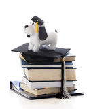 Grad Pooch Royalty Free Stock Images