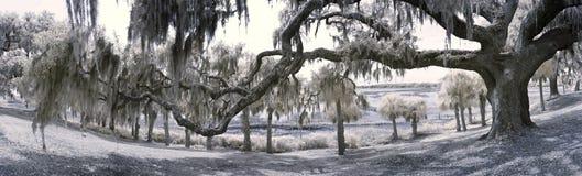 den 180 grad panoramat av den levande oaken och seglar utmed kusten Royaltyfria Foton