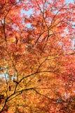Gradation des feuilles et de couleur d'automne images libres de droits