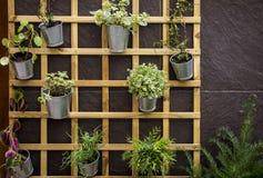 Grade de madeira em uma parede feita da pedra com vasos de flores metálicos Imagem de Stock