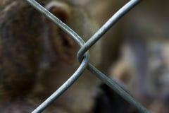 Grade no jardim zoológico Animal atrás das barras pilha Fotografia de Stock Royalty Free