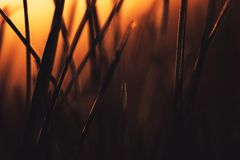 Graded shot of natural growing grass field. Background stock image