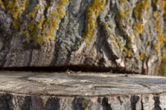 Graded tree stump. Wooden Texture Background in Nature royalty free stock photo