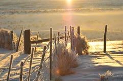 12 grader minus Arkivbild