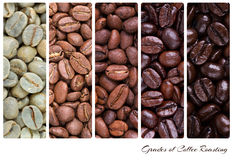 Grades of coffee roasting Royalty Free Stock Photos