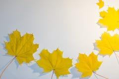 Gradiënten van bladeren op witte achtergrond worden geschikt die stock fotografie