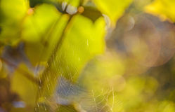 Gradient bokeh background, green to yellow vegetation background Stock Photos