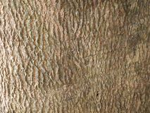 Gradient brown rough wood background. Wall and floor Royalty Free Stock Image