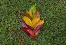 Gradient colored leafs Royalty Free Stock Photo