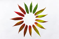 Gradient colored leaves arranged in a circle Royalty Free Stock Images