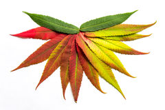Gradient colored leaves arranged in a half circle Stock Images