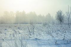 Gradient colorize snowy landscape with snow fog Royalty Free Stock Photography