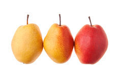 Gradient colour pears Stock Images