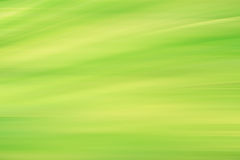 Gradient vert frais de feuillage de ressort de tache floue photo stock