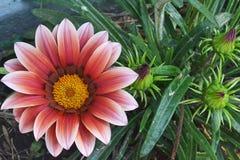 Gradientowe kwiat bramy zdjęcie royalty free