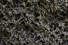 Gradierwerk (Saltwork) - Slechte sooden-Allendorf Royalty-vrije Stock Foto's