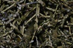 Gradierwerk (Saltwork) - Slechte sooden-Allendorf Stock Afbeelding