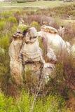 Gradina Zmeilor (der Garten des Drachen) Stockfoto