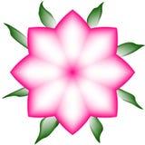 Gradinent-Rosa-Blume Lizenzfreies Stockfoto