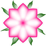 Gradinent rosa färgblomma Royaltyfri Foto