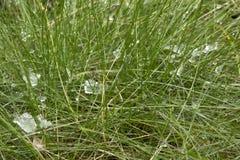 Gradu lub śniegu kawałki na pierwszy trawie w wiośnie obrazy royalty free