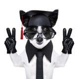 Graduate dog Stock Photos