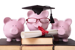 Graduate Piggy Bank college graduation diploma Royalty Free Stock Photo