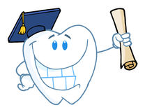 Graduate tooth holding a diploma Royalty Free Stock Photos