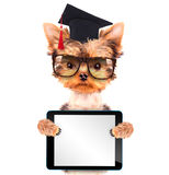 Graduated dog with tablet pc Royalty Free Stock Image