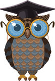 Graduated owl. Wise Intelligent Owl  illustration Royalty Free Stock Photography
