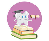 Graduated tooth. stock image
