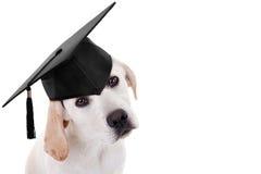 Graduatie Gediplomeerde Hond royalty-vrije stock foto