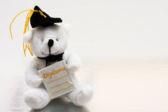 Graduating Bear Stock Photo