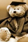 Graduation Bear royalty free stock images